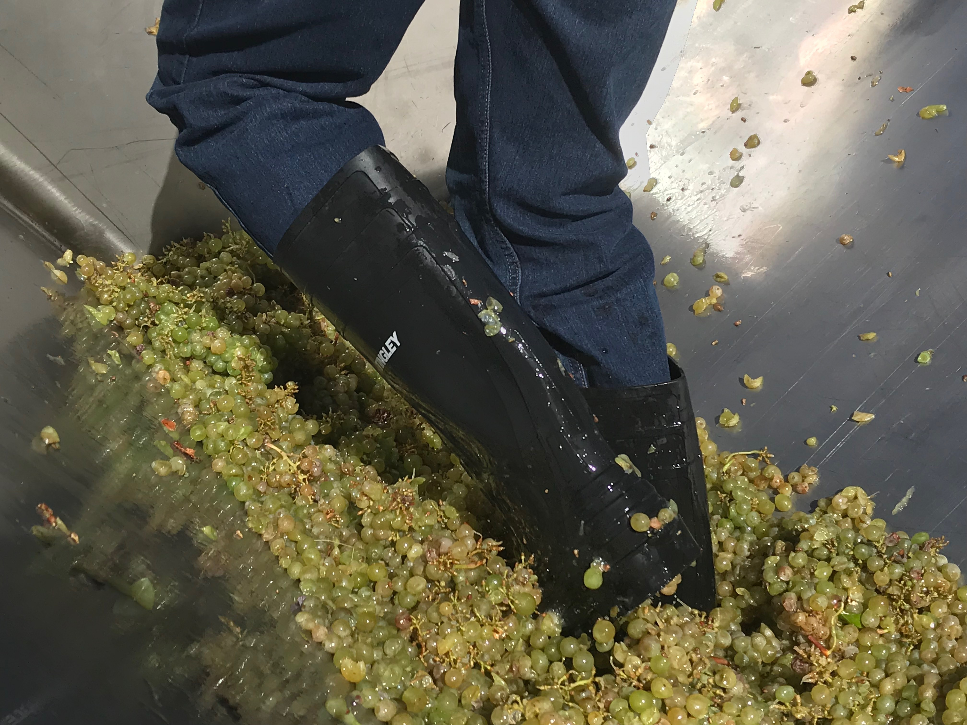 Wholecluster Pressing the Stillwater Creek Vineyard Chardonnay into our Bladder Press